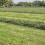 Kuilvoerwinning_(grass_silage)